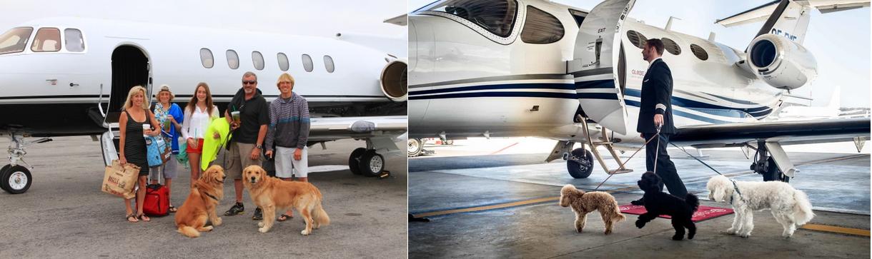 перелет на частном самолете с домашним животным